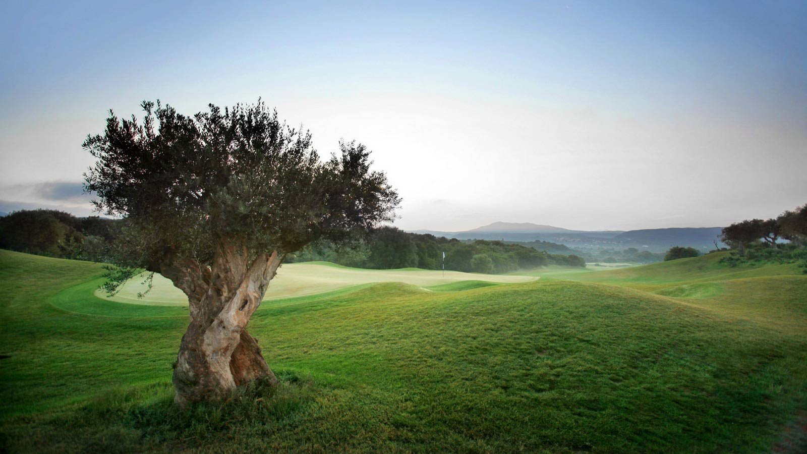 The Westin Resort Costa Navarino Messinia Greece Activities Golf The Dunes Course Olive Tree